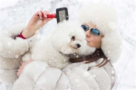 excessive shedding in dogs 5 ways to reduce excessive shedding in winter