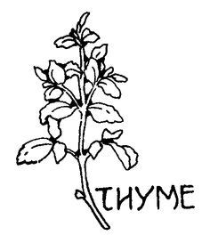 herb garden coloring pages herbs herbs list and medieval on pinterest