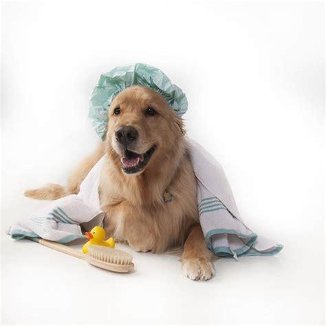 pet r banho e tosa para cachorros f 243 rmula pet