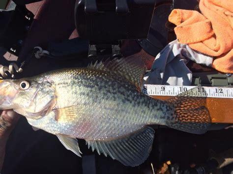 toledo bend crappie  february crappie fishing texas