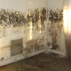 common types  mold  homes    spot