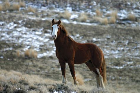 Hd Animals Wallpapers Mustang Horse Pictures