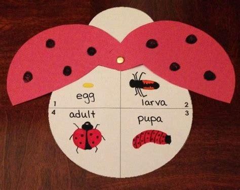 ladybug pattern for kindergarten ladybug life cycle craft life cycle craft ladybug and