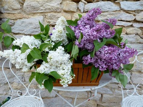 fragrant flowers for garden how to make a small fragrant garden fragrant plants for