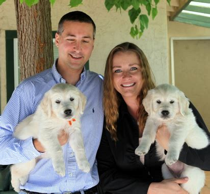 northern california golden retriever breeders best golden retriever breeders northern california dogs in our photo