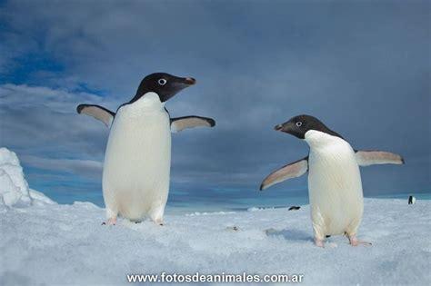fotos animales marinos animales marinos pictures