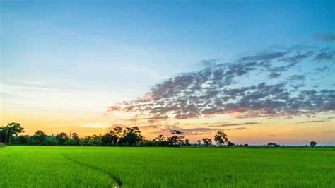 nature sounds hd south india goa tropical jungle