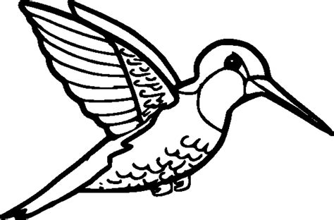 coloring page hummingbird printable hummingbird coloring pages coloring me