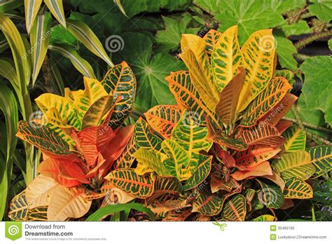 decorative plants stock photo image 35465190