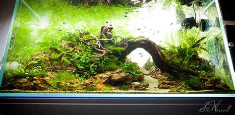 dragon stone aquascape stu s 90x45x45 apalala shore iaplc 2012 114 aga 2012