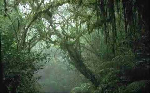 Canopy Layer Rainforest by Rain Forests Page 2 Tropical Rainforest Layers