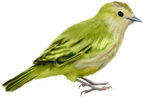 imagenes de aves sin fondo aves png 2 4 taringa