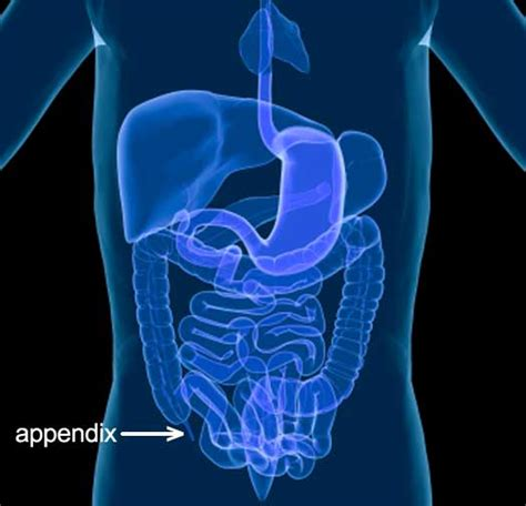 Appendix Detox by Why Your Lymph System May Need Some Tlc Allergies Your Gut