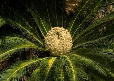 sago palm dogs 8 plants that are poisonous to cats and dogs