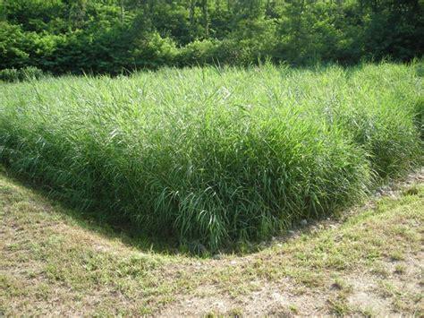 vasca fitodepurazione fitodepurazione in fattoria didattica in toscana arezzo