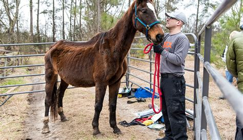 shelters in nc aspca rescue operation in carolina ranch animal rescue