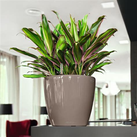 Ls For Indoor Plants by Pflanzk 252 Bel Lechuza 174 Classico Ls All In One Set