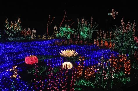 Garden Of Lights Botanical Gardens Bellevue Botanical Garden D Lights Fave Places In Greater Seattle A