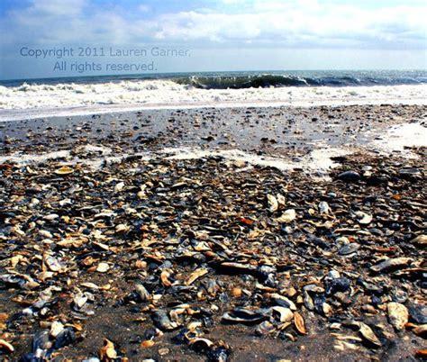 blue wave boats charleston sc 17 best folly beach images on pinterest folly beach