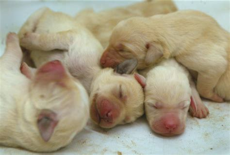 newborn puppies ten great lessons you can learn from what to do with