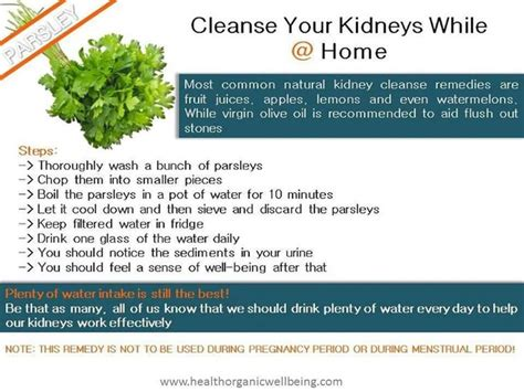 Parsley Detox Kidneys by Parsley Kidney Cleanse Fitness