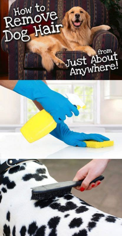 how to remove pet hair from sofa 25 best ideas about dog hair removal on pinterest