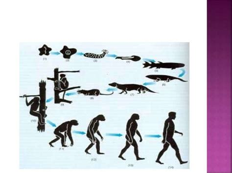 Outer Evolve 61 best neanderthals images on history human