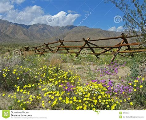 Anza Borrego Wildflowers by Old Fence Desert Wildflowers Stock Images Image 4734564