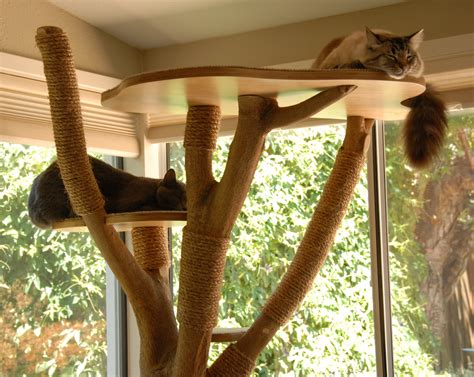 real tree or fake foe cats i made a cat tree from an actual tree diy