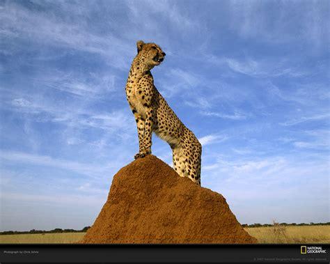 National Geographic Wildlife animal planet channel 2015 wildlife animals national
