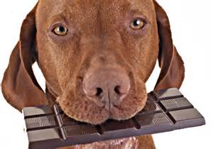 can dogs die from chocolate chocolate cake ideas and designs