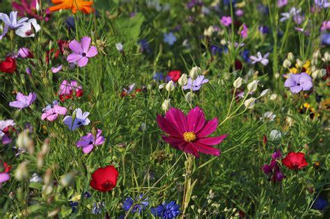 aprire un negozio di fiori aprire un negozio di fiori nel 2018 idee consigli