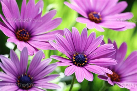 watermerk bloem fotobehang bloemen canvas printen posters paarse
