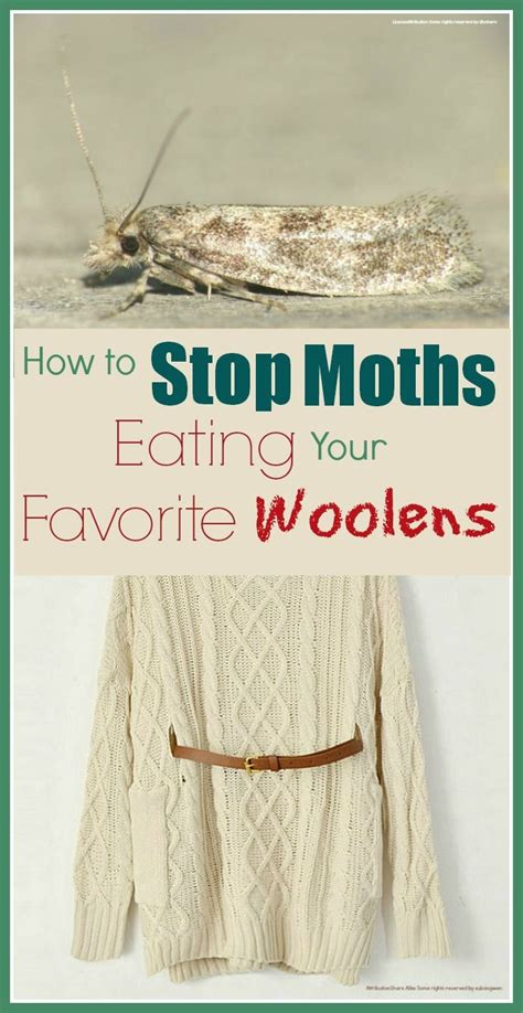 How To Get Rid Of Moths In Wardrobes Naturally by 1000 Images About Clothing Moth Diy On Moth