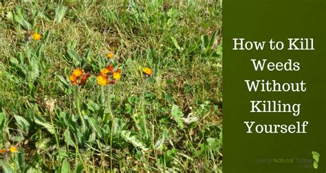 how to kill weeds without killing yourself