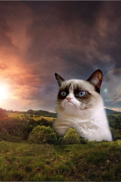 Grumpy Cat Wallpaper Iphone | grumpy cat iphone wallpaper wallpapersafari