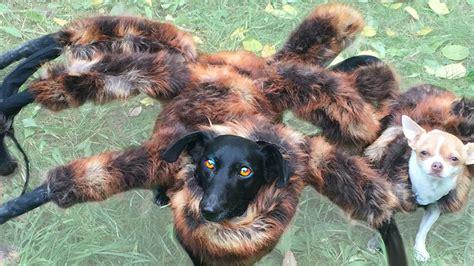 spider puppy image gallery spider