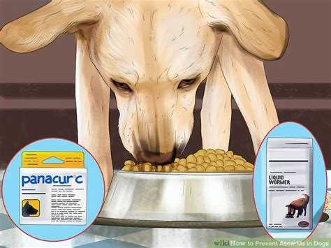 how often should puppies be dewormed how to prevent ascarids in dogs 9 steps with pictures wikihow