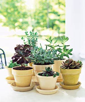 how to care for potted plants real simple