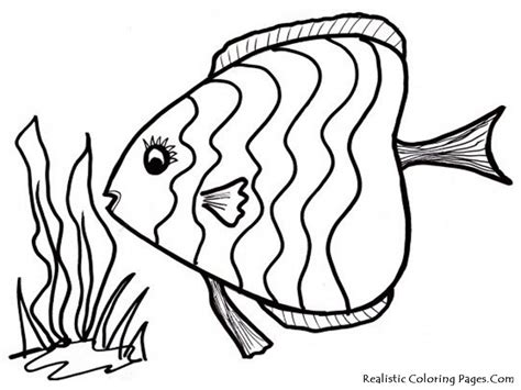 realistic rainbow coloring page realistic tropical fish coloring pages clipart panda