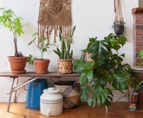 Gartenpflanzen Die Wenig Licht Brauchen by 7 Pflegeleichte Zimmerpflanzen Die Wenig Licht Brauchen