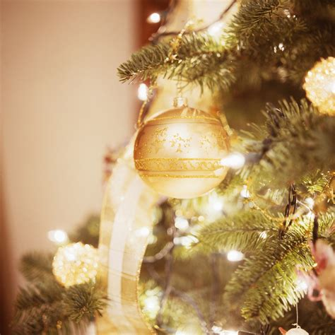 christmas tree photography digital photography secrets