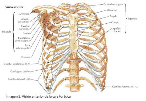 dolore gabbia toracica posteriore fameluz torax oseo