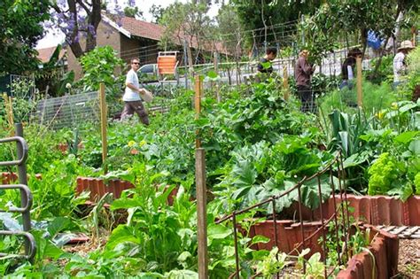 backyard permaculture design permaculture urbaine permaculturedesign