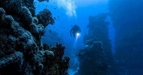 Kaos Diving Padi 2 padi rnli diver sea survival course