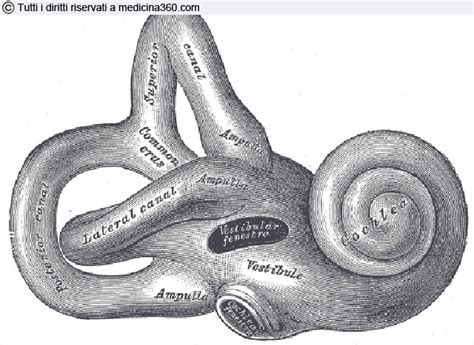 infiammazione orecchio interno cura labirintite sintomi cause diagnosi e cura per la fase