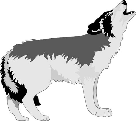 wolf howling moon  vector graphic  pixabay