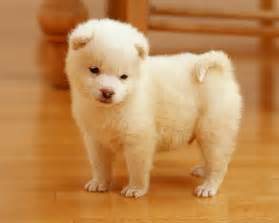 puppy wallpaper hd wallpapers cute puppies wallpapers