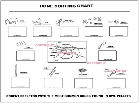 Owl Pellet Bone Chart Worksheet 8 best images of owl pellet bone chart printable owl