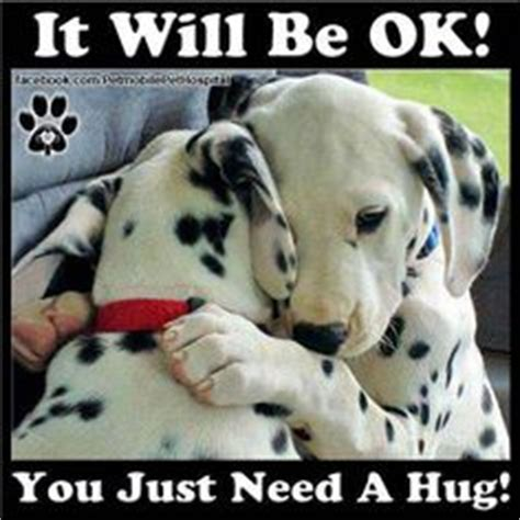 It Will Be Ok 1000 images about keep animals safe on